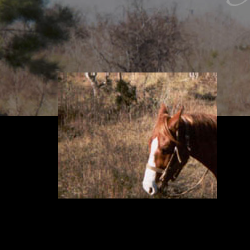 "Screen capture from ""Girls' Day Out"" by Kerry Lawrynovicz. A portrait of a horse is superimposed on a background whose top half shows a field of brush over a solid black bottom half. No text."