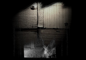 "Screen capture from ""Dans la gueule du loup"" by Nicolas Clauss and Jean-Jacques Birgé. Heavily shadowed photograph of a grayscale kitten projected against a cement wall."